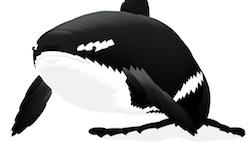 Акула следующая за мышкой