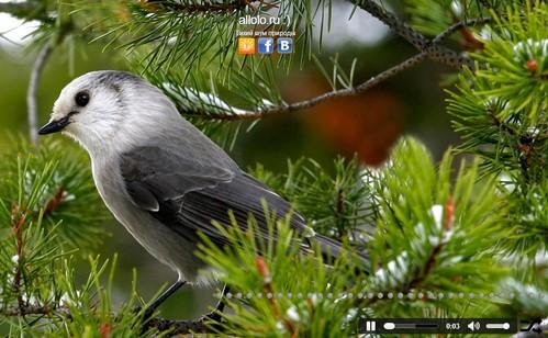 Релакс звуки природы онлайн