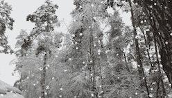 Наложить падающие снежинки на картинку в виде анимации