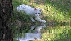 Зеркальное отражение с эффектом воды