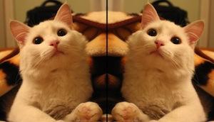 Эффект зеркала в онлайн сервисе, бесплатно и быстро