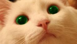 Изменить цвет глаз онлайн без фотошопа