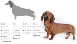 Онлайн определитель породы собаки