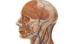 Анатомия человека онлайн
