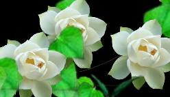 Рисовать онлайн красивыми цветочками