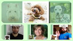 Определитель породы собаки по фото